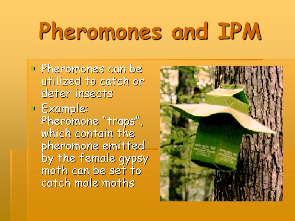 Pheromones and IPM