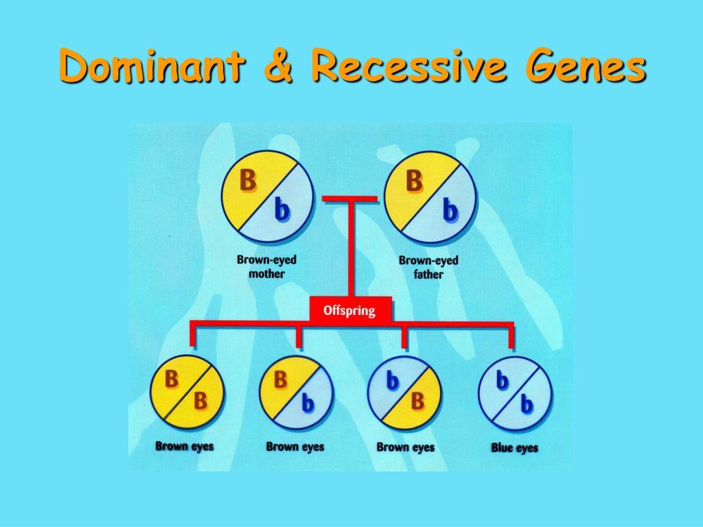 Dominant & Recessive Genes