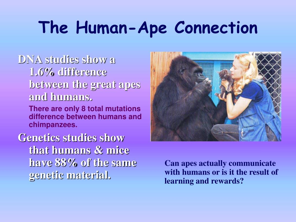 DNA studies show a 1.6% difference between the great apes and humans.