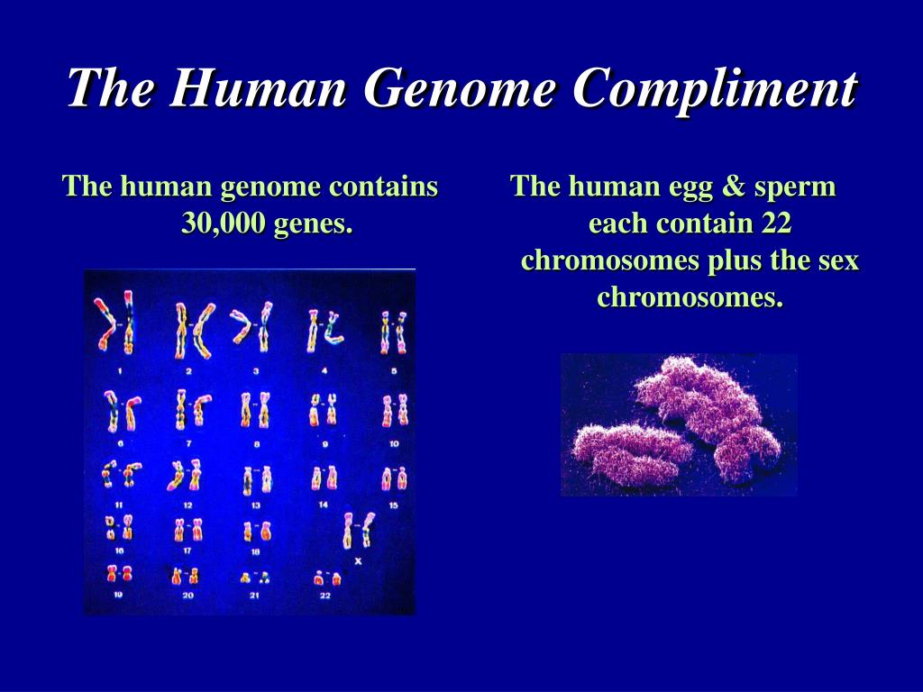 The human genome contains 30,000 genes.