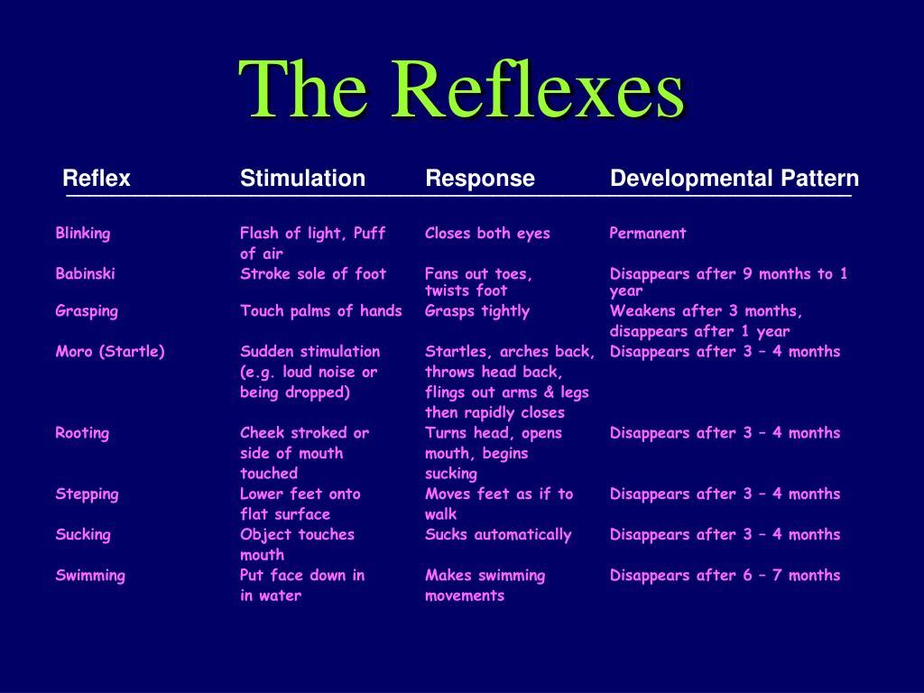 The Reflexes
