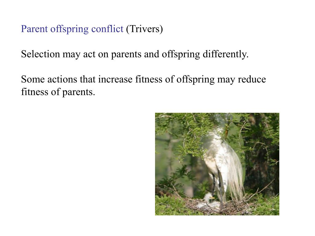 Parent offspring conflict