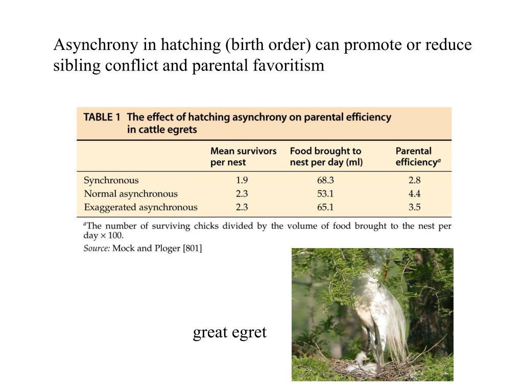 Asynchrony in hatching (birth order) can promote or reduce sibling conflict and parental favoritism