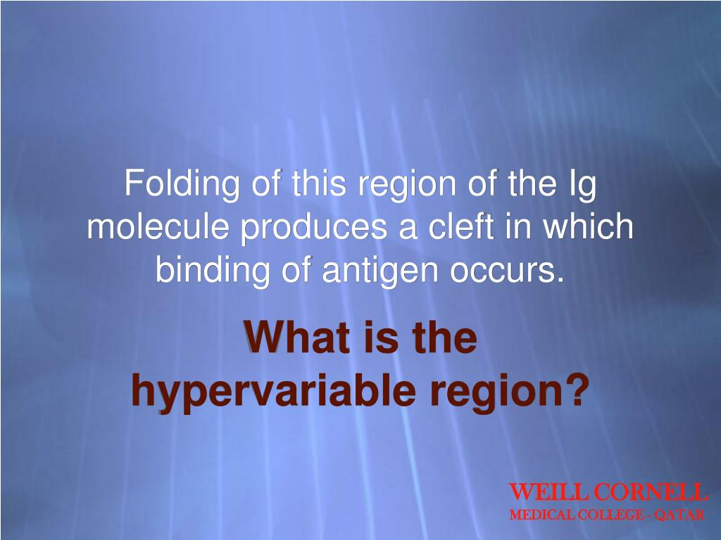 Folding of this region of the Ig molecule produces a cleft in which binding of antigen occurs.