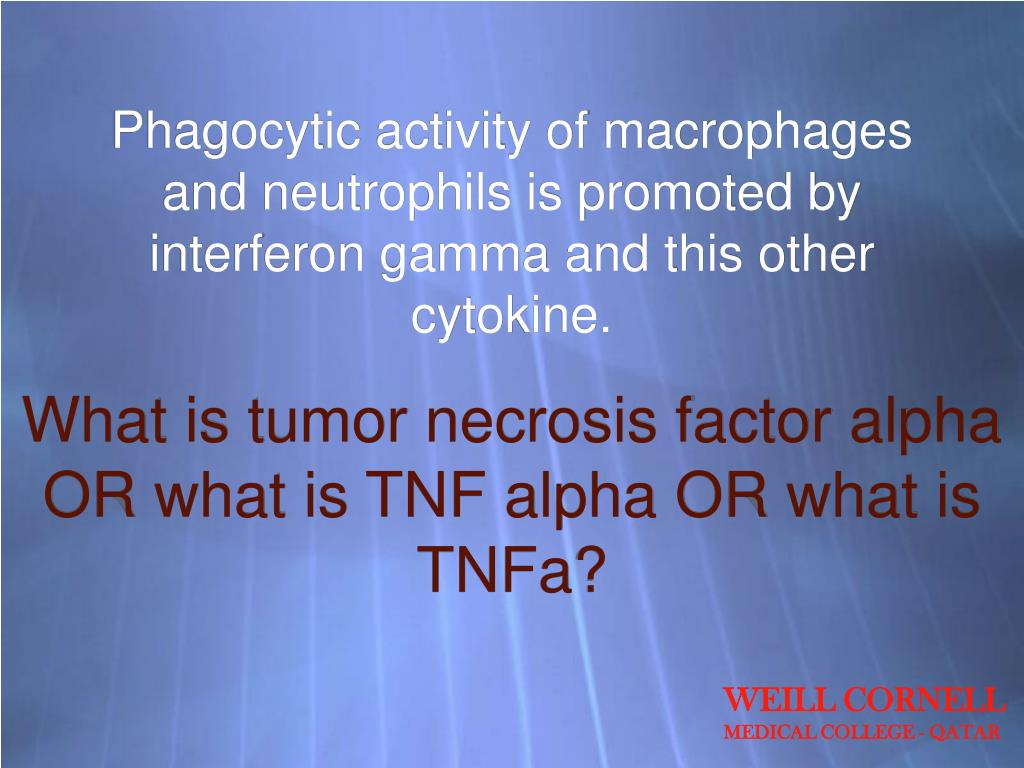 Phagocytic activity of macrophages and neutrophils is promoted by interferon gamma and this other cytokine.
