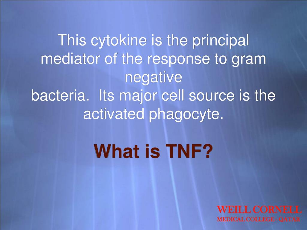 This cytokine is the principal mediator of the response to gram negative