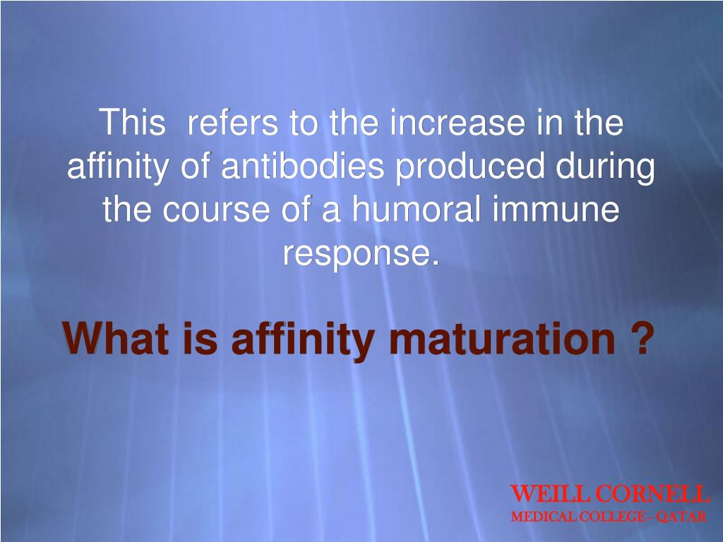 This  refers to the increase in the affinity of antibodies produced during