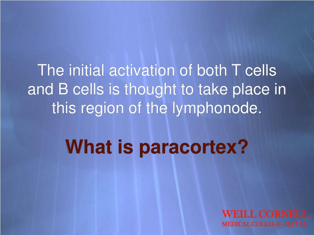 The initial activation of both T cells and B cells is thought to take place in this region of the lymphonode.