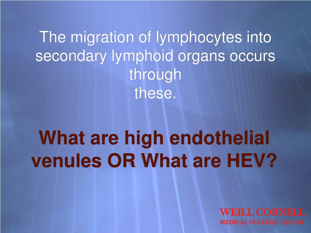 The migration of lymphocytes into secondary lymphoid organs occurs through