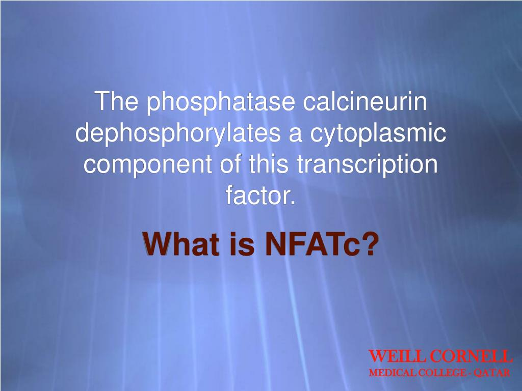 The phosphatase calcineurin dephosphorylates a cytoplasmic component of this transcription factor.
