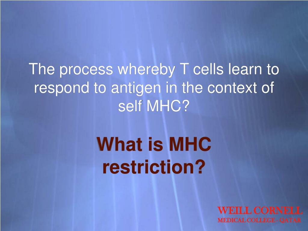 The process whereby T cells learn to respond to antigen in the context of