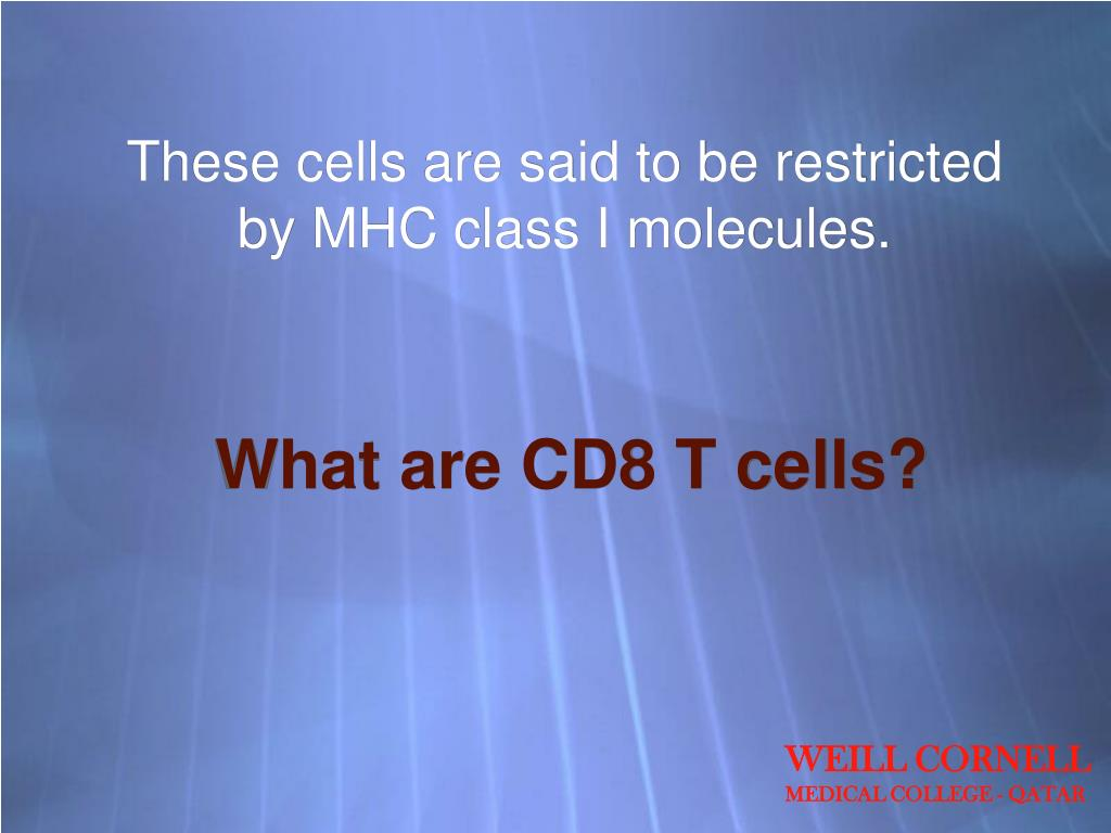 These cells are said to be restricted by MHC class I molecules.