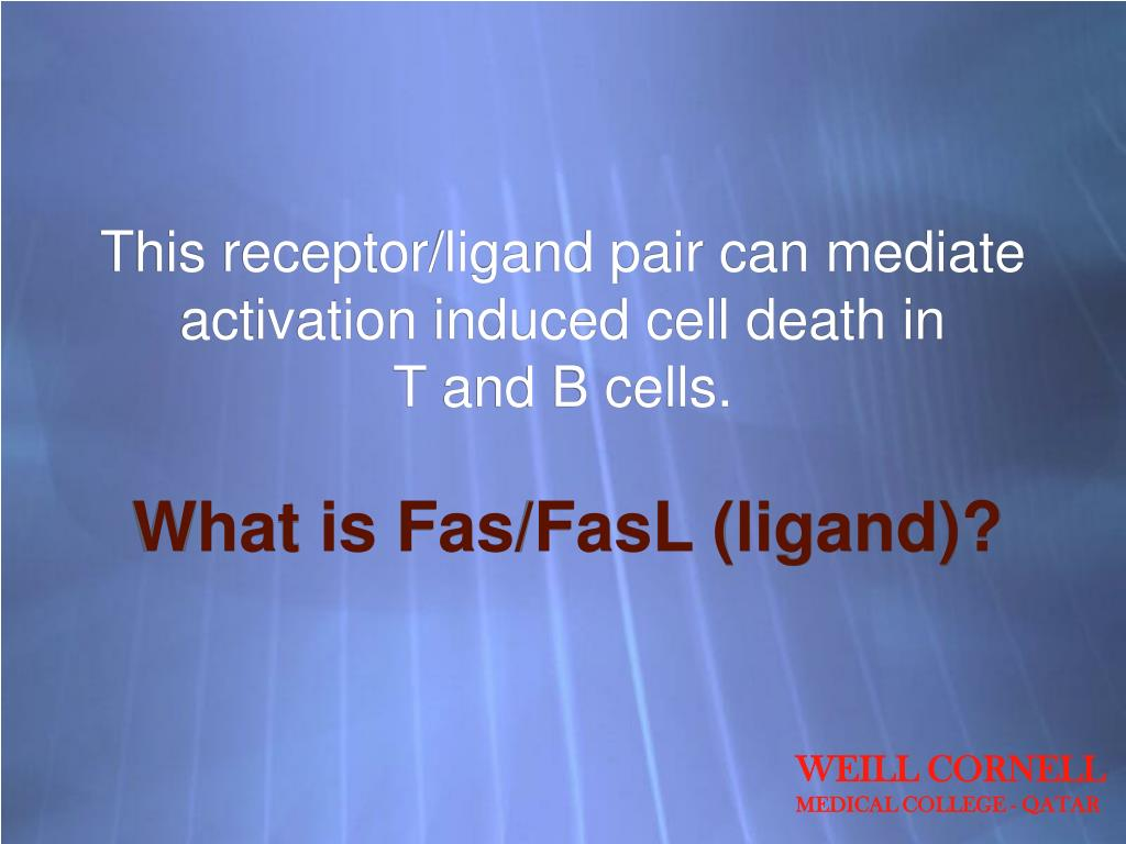 This receptor/ligand pair can mediate activation induced cell death in
