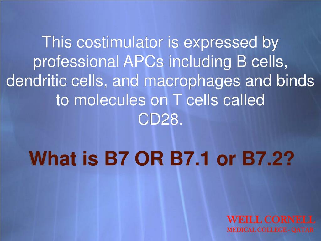 This costimulator is expressed by professional APCs including B cells,