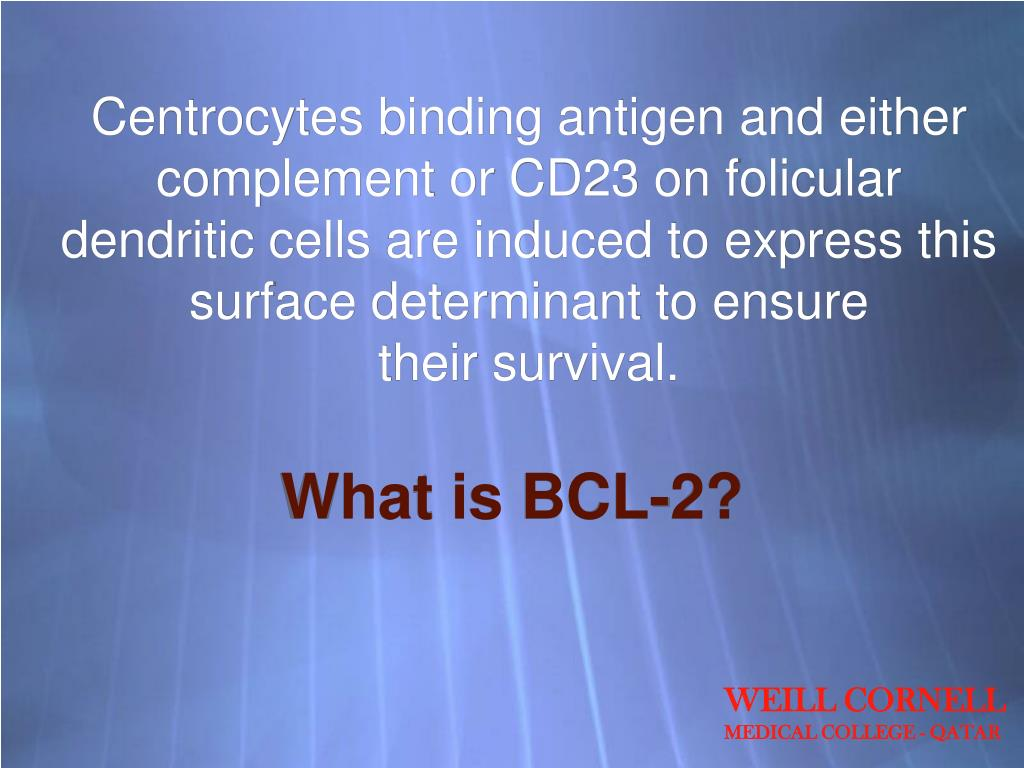 Centrocytes binding antigen and either complement or CD23 on folicular