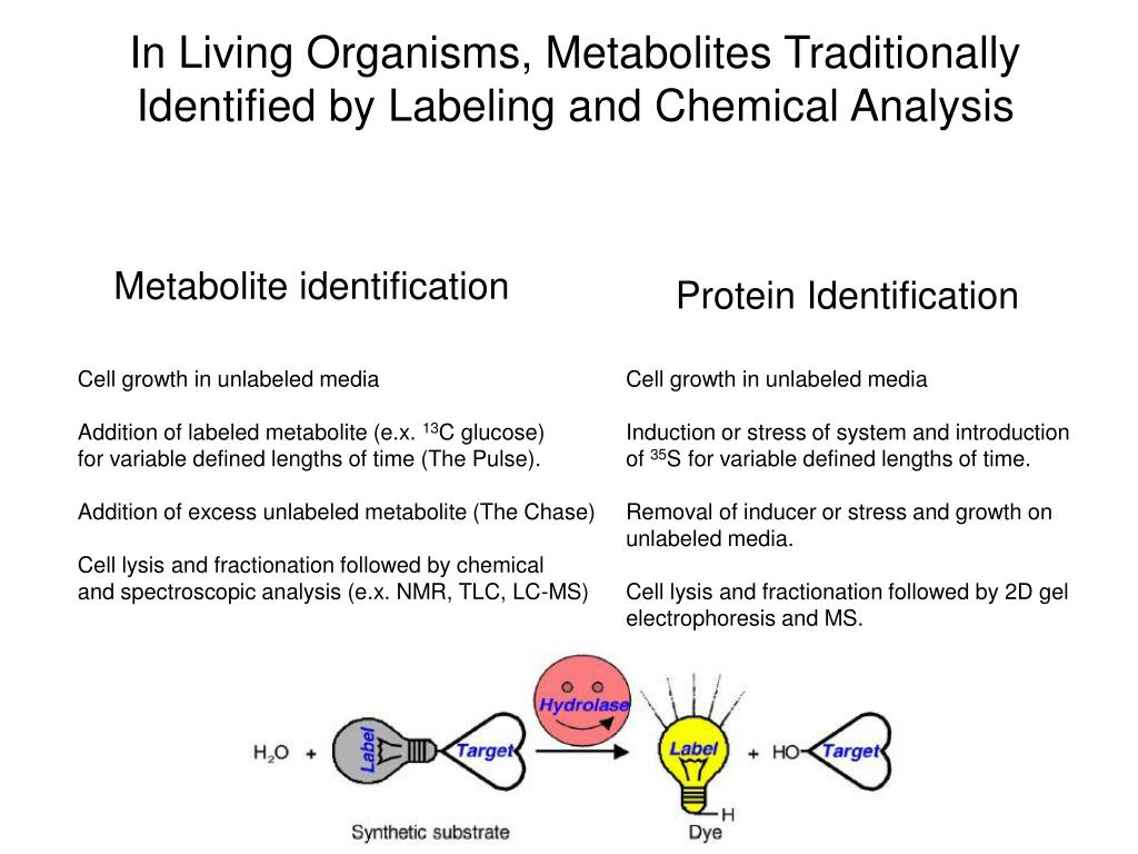 In Living Organisms, Metabolites Traditionally