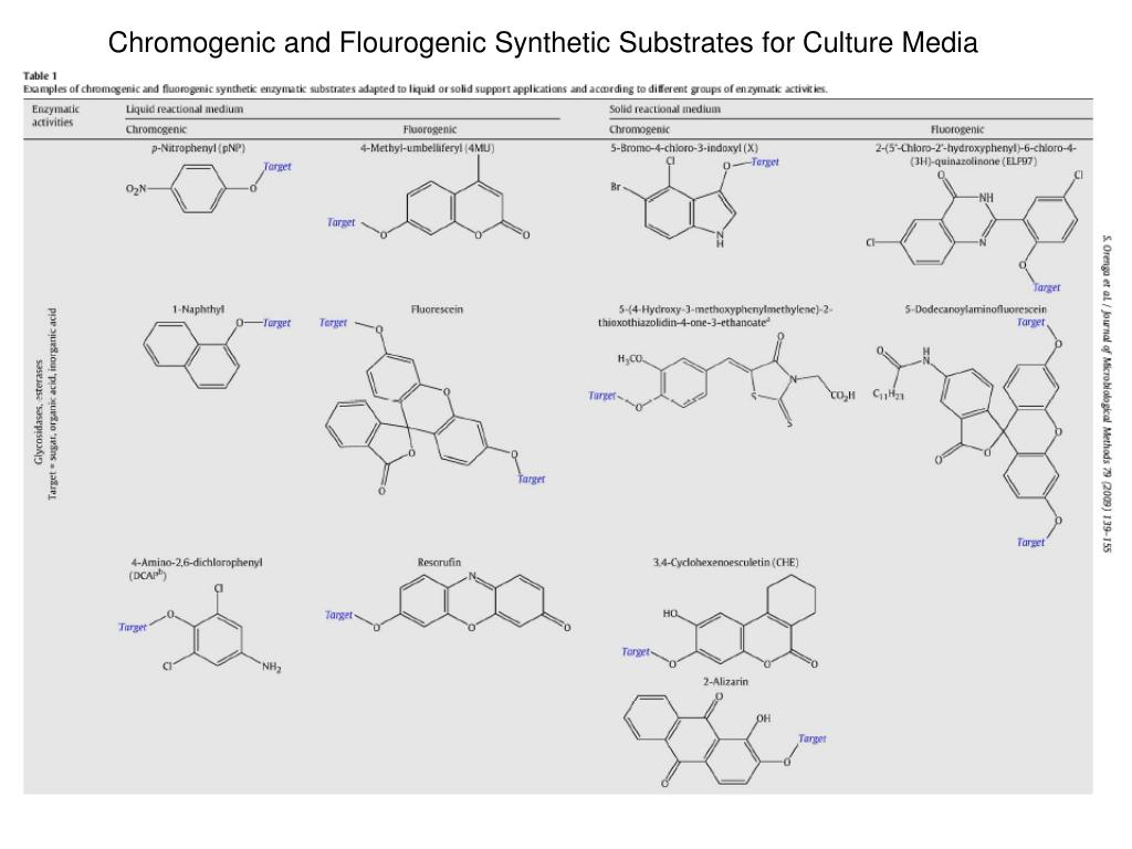 Chromogenic and Flourogenic Synthetic Substrates for Culture Media