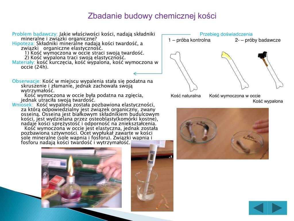 Zbadanie budowy chemicznej kości