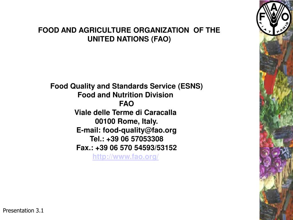 FOOD AND AGRICULTURE ORGANIZATION  OF THE UNITED NATIONS (FAO)