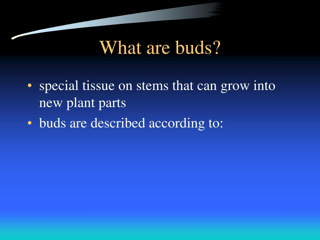 What are buds?