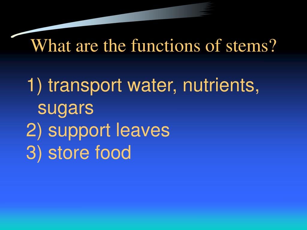 What are the functions of stems?