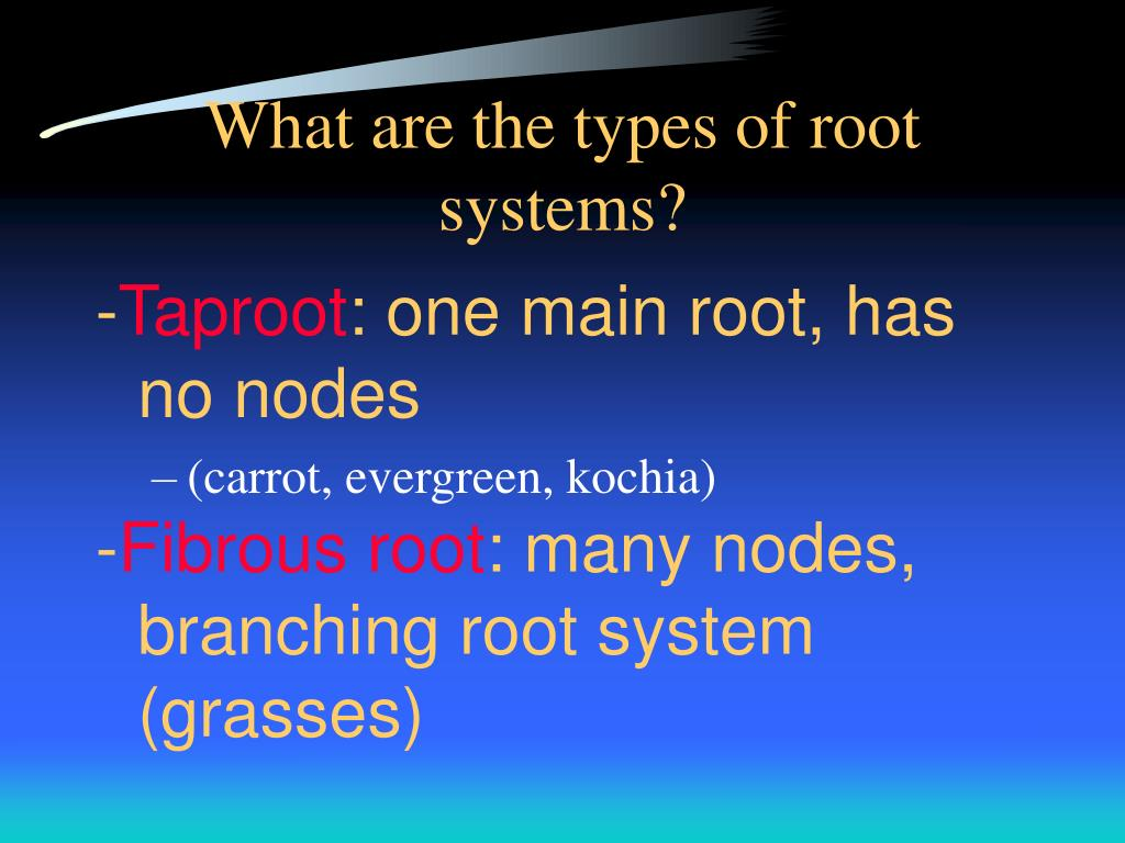 What are the types of root systems?