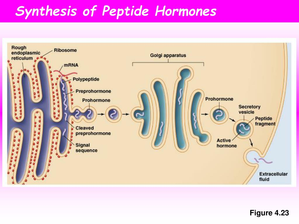 steroid and peptide hormones typically have in common