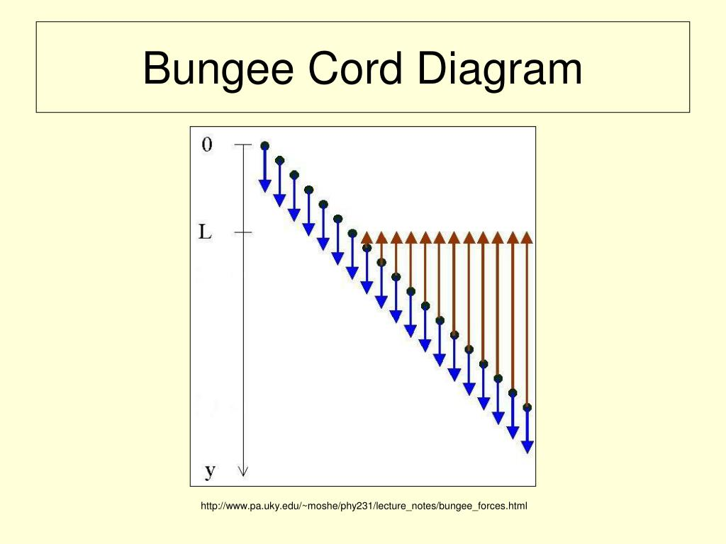 bungee physics Computer 7 physics with vernier 7 - 1 bungee jump accelerations in this experiment, you will investigate the accelerations that occur during a bungee jump.
