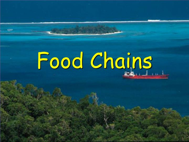 Food chains l.jpg