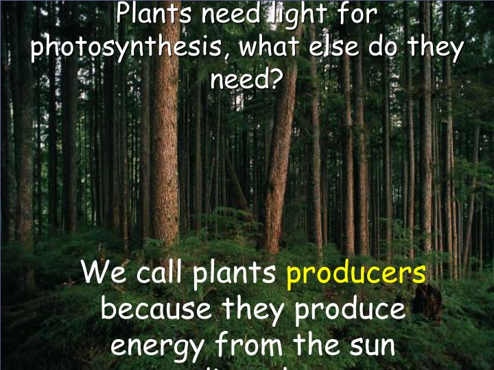 Plants need light for photosynthesis what else do they need l.jpg