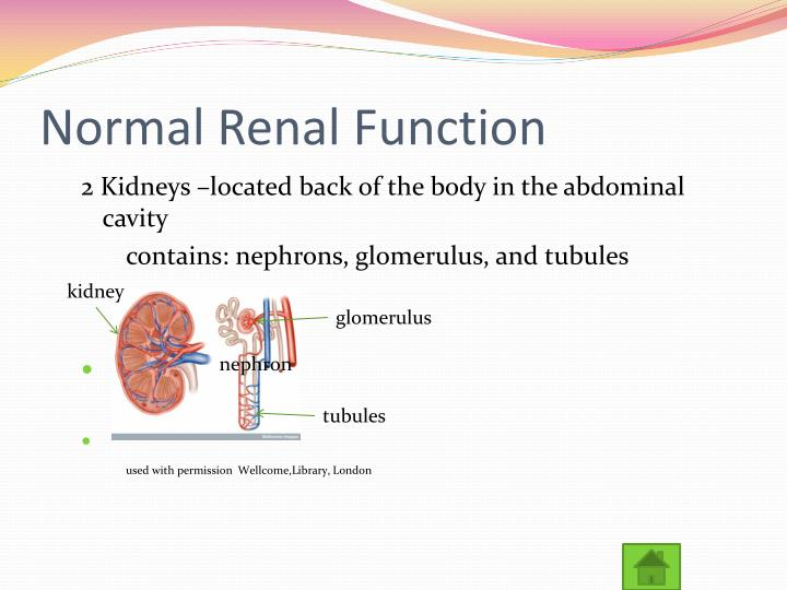 Normal renal function