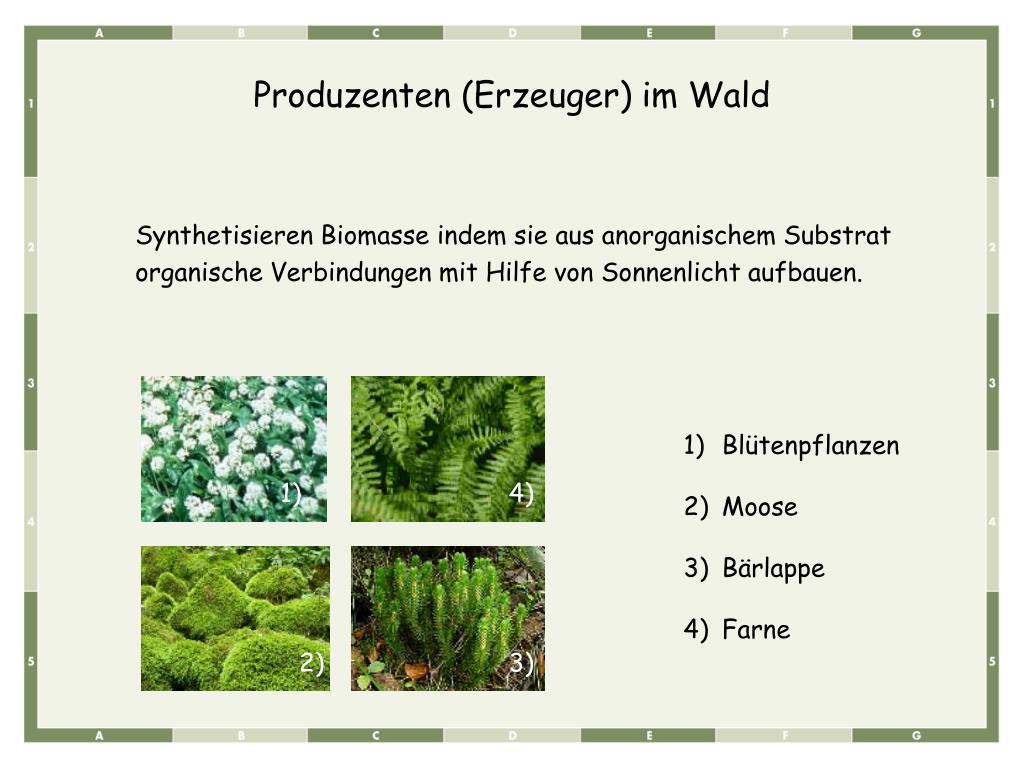 Produzenten (Erzeuger) im Wald