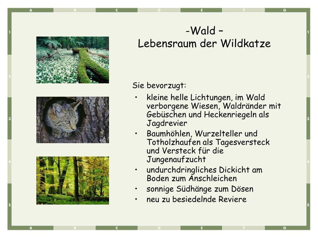 kleine helle Lichtungen, im Wald verborgene Wiesen, Waldränder mit Gebüschen und Heckenriegeln als Jagdrevier
