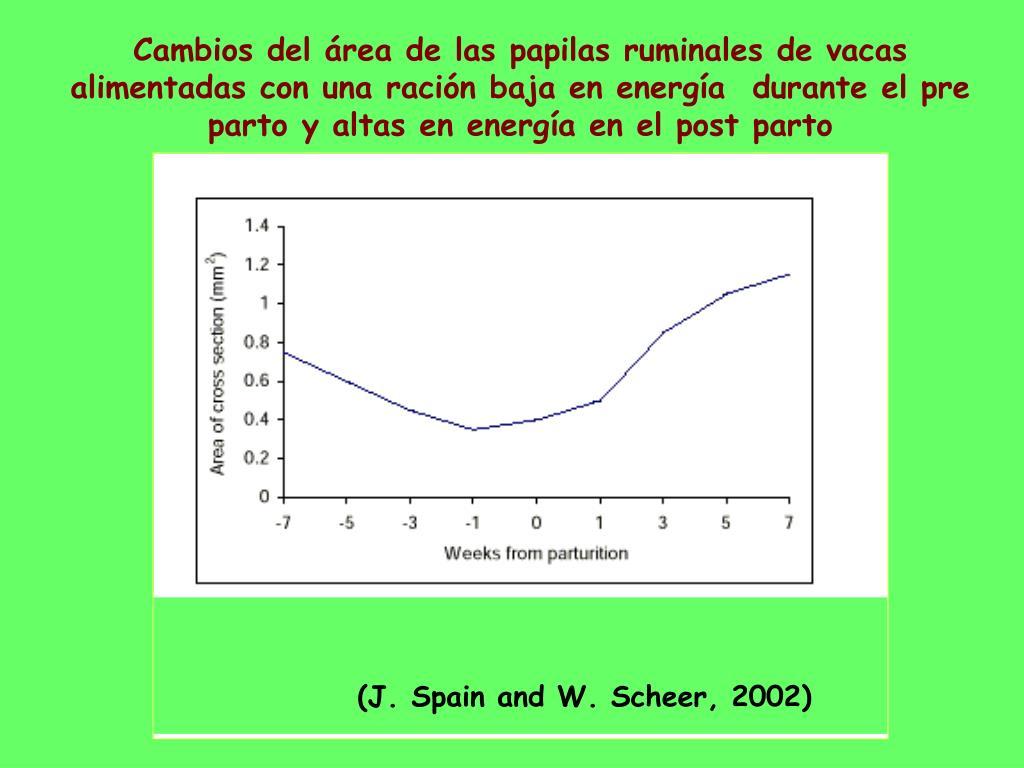 Cambios del área de las papilas ruminales de vacas alimentadas con una ración baja en energía  durante el pre parto y altas en energía en el post parto