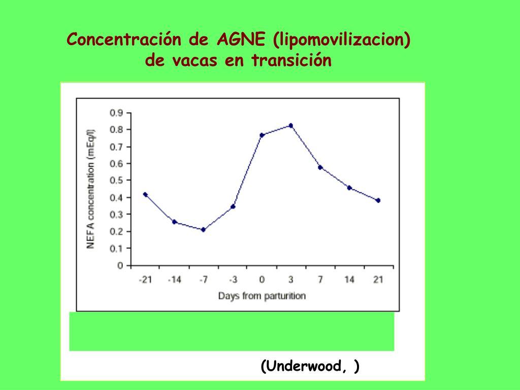 Concentración de AGNE (lipomovilizacion) de vacas en transición