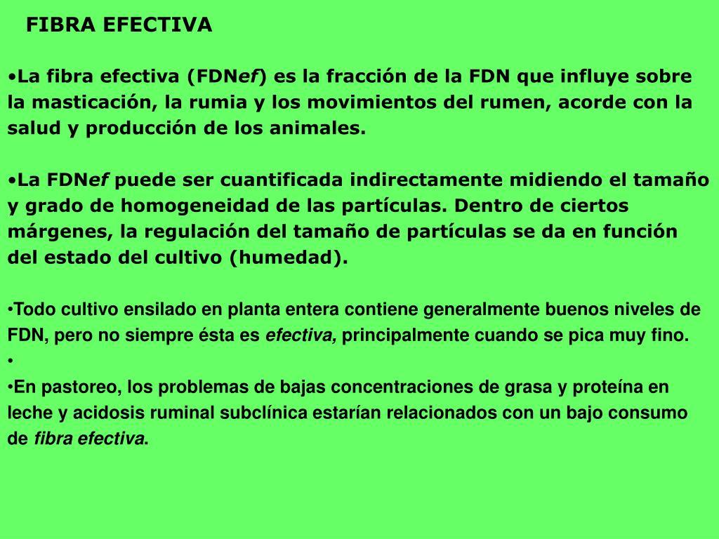 FIBRA EFECTIVA