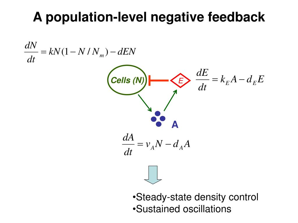 A population-level negative feedback