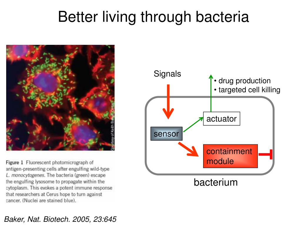 Better living through bacteria