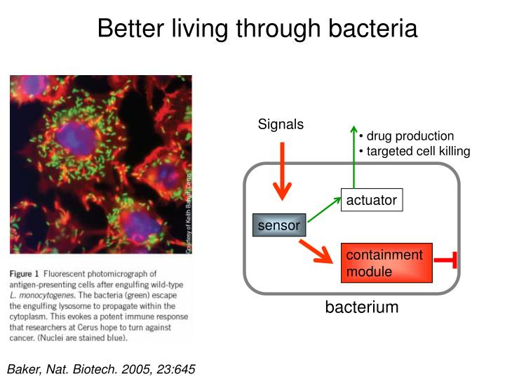 Better living through bacteria l.jpg