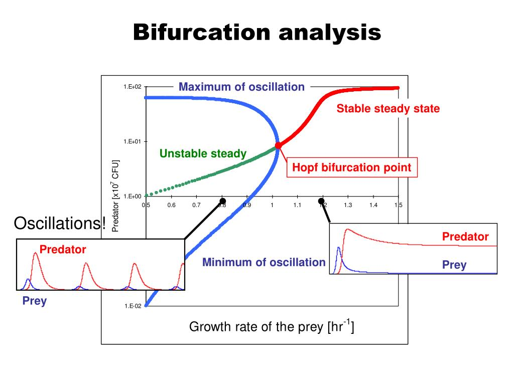 Bifurcation analysis