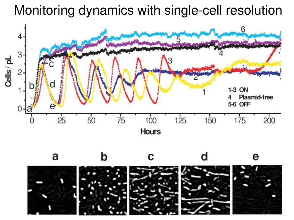 Monitoring dynamics with single-cell resolution