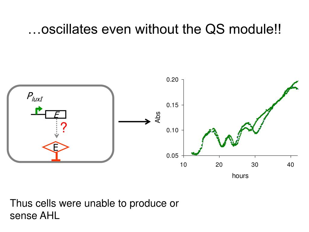 …oscillates even without the QS module!!