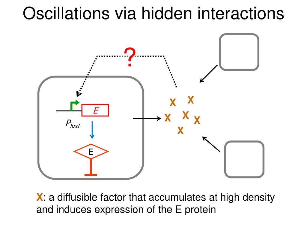 Oscillations via hidden interactions