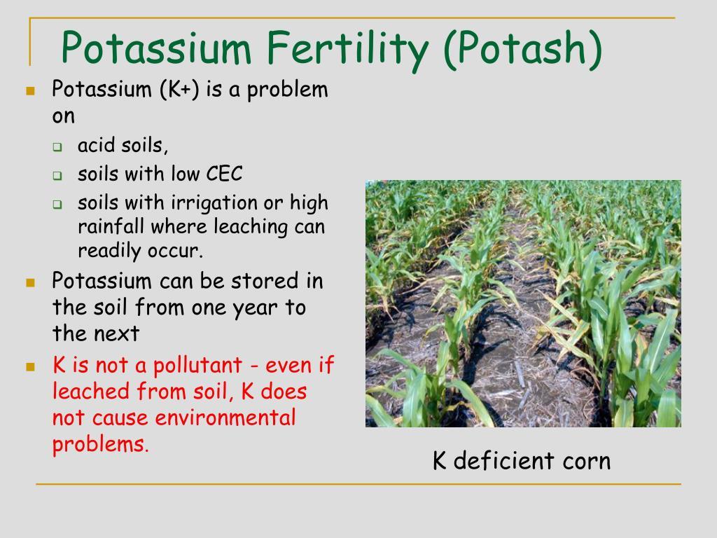 Potassium Fertility (Potash)