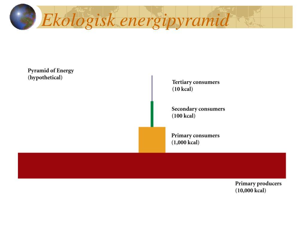 Ekologisk energipyramid