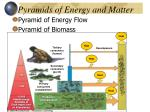 pyramids of energy and matter