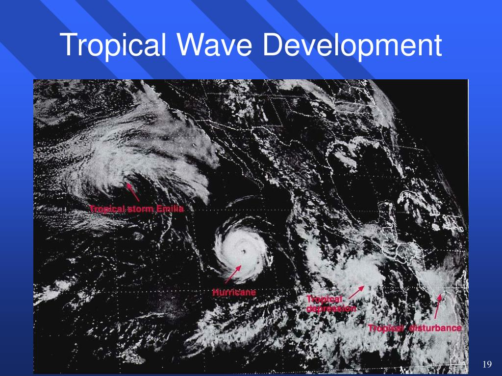 Tropical Wave Development