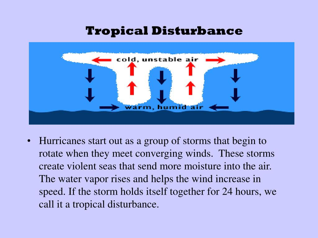 Hurricanes start out as a group of storms that begin to rotate when they meet converging winds.  These storms create violent seas that send more moisture into the air.  The water vapor rises and helps the wind increase in speed. If the storm holds itself together for 24 hours, we call it a tropical disturbance.