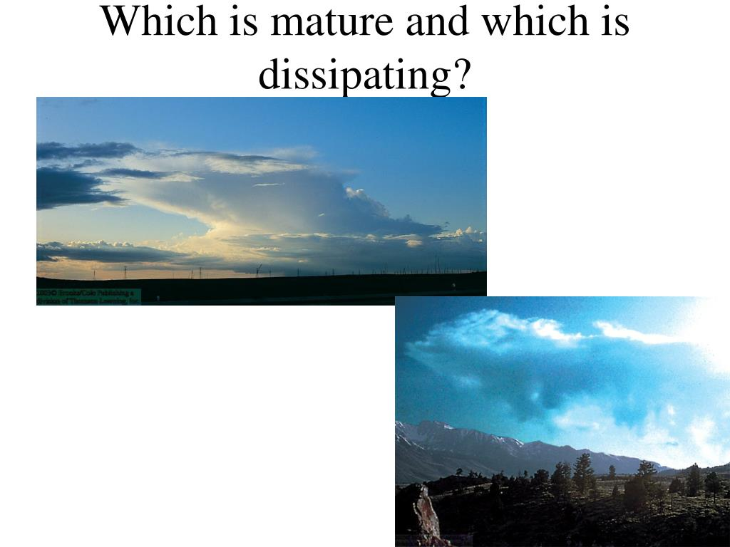 Which is mature and which is dissipating?
