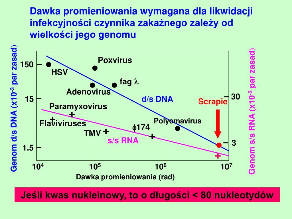 Dawka promieniowania wymagana dla likwidacji infekcyjności czynnika zakaźnego zależy od wielkości jego genomu